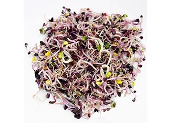 Germogli di cavolo rosa