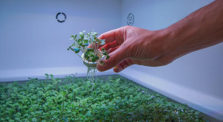 Verdura in cialde per serra indoor