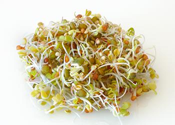 germoglio di quinoa